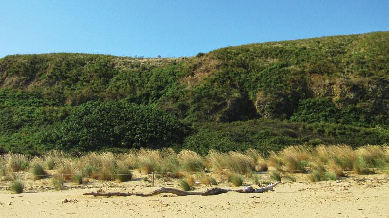 dune di punta penna