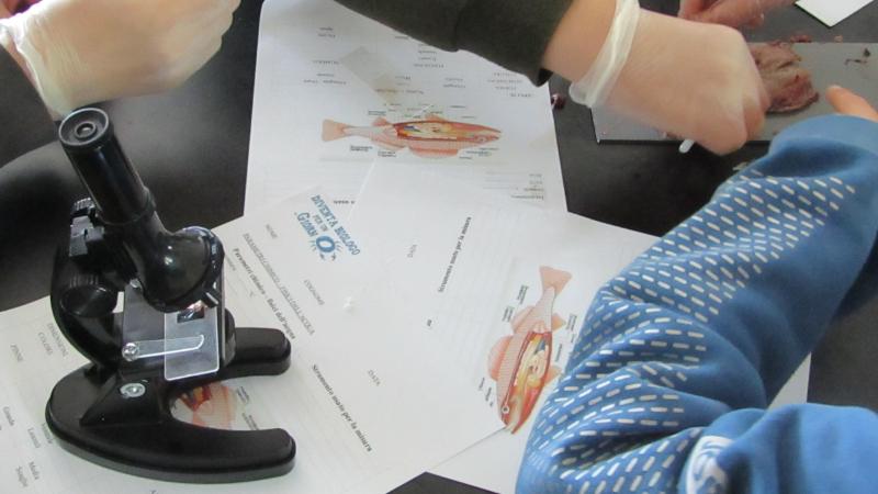 Laboratorio di biologia marina