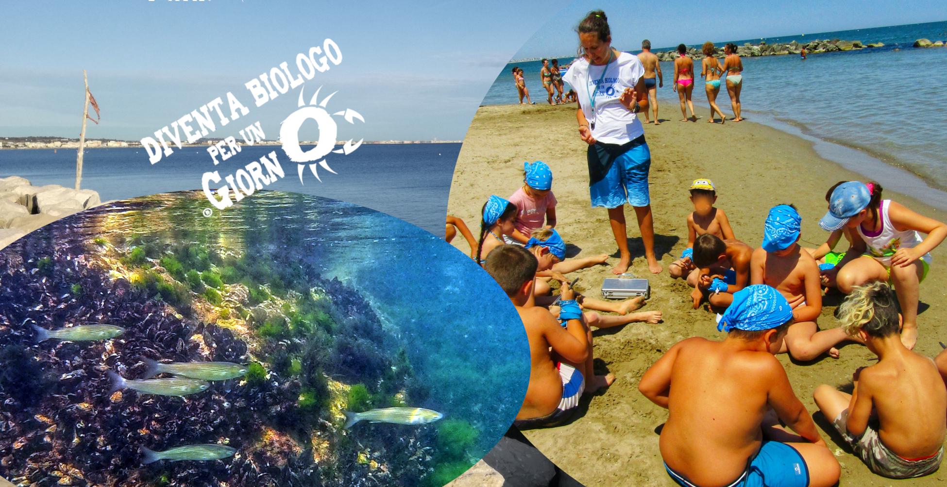 Camp di biologia marina
